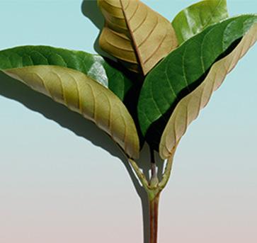 原材料と植物のビジュアル