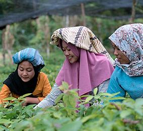 稲田で働く女性の写真